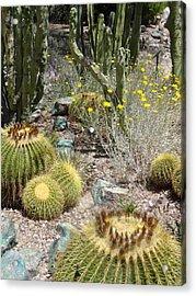 Barrels And Barrels Of Cactus Acrylic Print