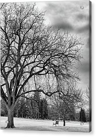 Winter In Cheesman Park, Denver, Co Empty Trees And Empty Benches Acrylic Print