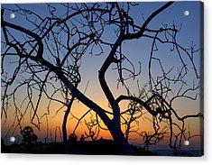 Acrylic Print featuring the photograph Barren Tree At Sunset by Lori Seaman