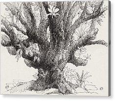 Barringtonia Tree Acrylic Print