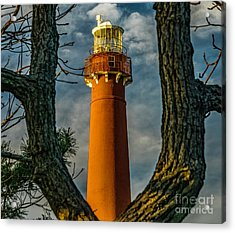 Acrylic Print featuring the photograph Barrny Thru The Trees by Nick Zelinsky