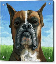 Barry Boxer Acrylic Print by Linda Apple
