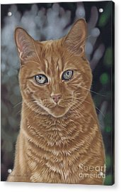 Barry The Cat Acrylic Print