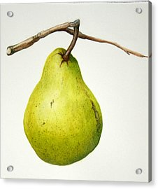 Bartlett Pear Acrylic Print by Margit Sampogna