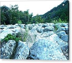 Barton Creek Dried Up Acrylic Print by Chuck Taylor