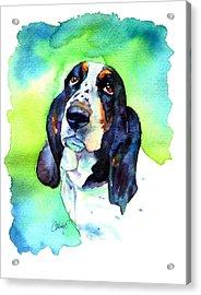 Basett Hound Acrylic Print