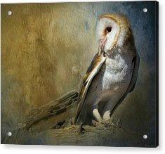 Bashful Barn Owl Acrylic Print