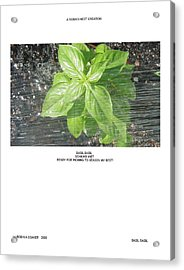 Acrylic Print featuring the photograph Basil Basil by Robin Coaker