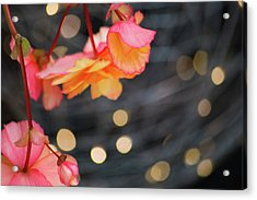 Acrylic Print featuring the photograph Basket Begonia by Lora Lee Chapman