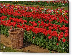 Acrylic Print featuring the photograph Basket For Tulips by Susan Candelario