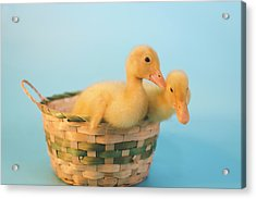 Basket Of Fun Acrylic Print