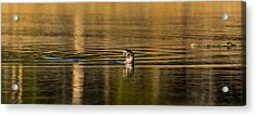 Acrylic Print featuring the photograph Basking In The Sunset Light by Yeates Photography