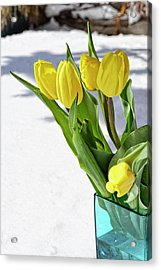Acrylic Print featuring the photograph Basking In The Sunshine by Traci Cottingham