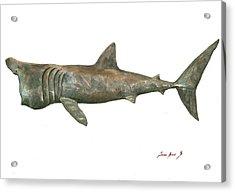 Basking Shark Acrylic Print