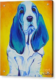 Basset - Ol' Blue Acrylic Print by Alicia VanNoy Call