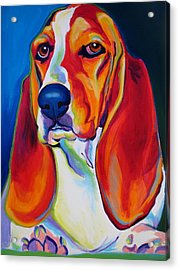 Basset Hound - Maple Acrylic Print by Alicia VanNoy Call
