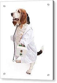 Basset Hound Dog Dressed As A Veterinarian Acrylic Print by Susan Schmitz