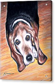 Acrylic Print featuring the painting Basset Hound  by Patricia L Davidson