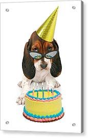 Basset Hound Puppy Wearing Sunglasses  Acrylic Print by Susan Schmitz