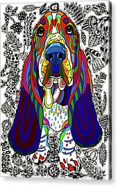 Basset Hound Acrylic Print by ZileArt