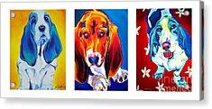 Basset Trio Acrylic Print by Alicia VanNoy Call