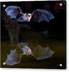 Bat Flying Over Pond Acrylic Print