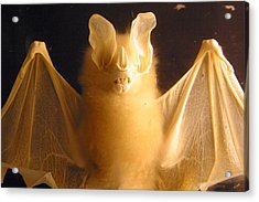 Bat Out Of Gel Acrylic Print by Jez C Self