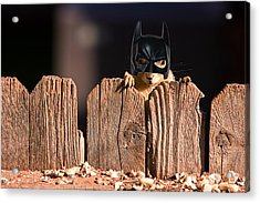 Bat Squirrel  The Cape Crusader Known For Putting Away Nuts.  Acrylic Print by James BO  Insogna