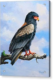 Bateleur Eagle Acrylic Print by Anthony Mwangi