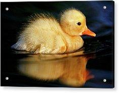 Bath Duckie Acrylic Print