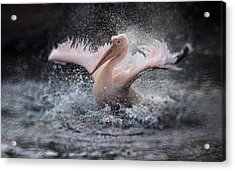 Bathing Fun ..... Acrylic Print by Antje Wenner