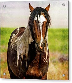 Acrylic Print featuring the photograph Battle Worn Stallion by Mary Hone