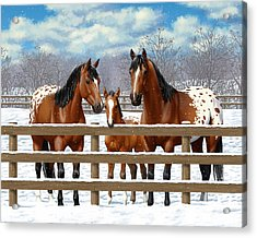 Bay Appaloosa Horses In Snow Acrylic Print by Crista Forest