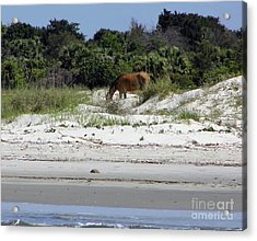 Bay At The Beach Acrylic Print