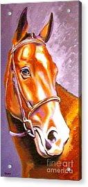 Bay Champion Acrylic Print by Susan A Becker