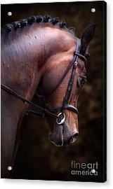 Bay Horse Head Acrylic Print