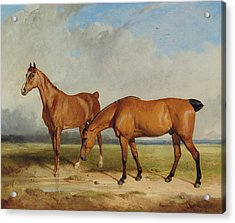 Bay Hunter And Chestnut Mare In A Field Acrylic Print by Thomas Woodward