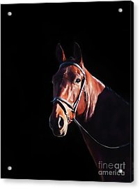 Bay On Black - Horse Art By Michelle Wrighton Acrylic Print by Michelle Wrighton