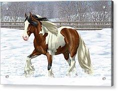 Bay Pinto Gypsy Vanner In Snow Acrylic Print