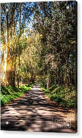 Bayhill Road Bodega Bay Sonoma County Acrylic Print by Blake Webster