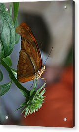 Acrylic Print featuring the photograph Be Happy by Cathy Harper