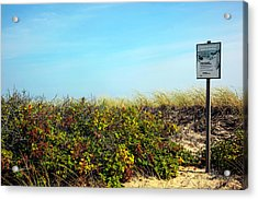 Acrylic Print featuring the photograph Be Kind To The Dune Plants by Madeline Ellis