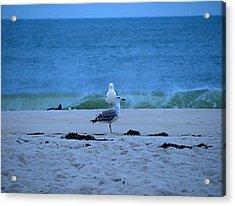 Acrylic Print featuring the photograph Beach Birds by  Newwwman
