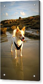 Beach Boy 2 Acrylic Print by Mandy Shupp