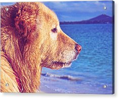 Beach Buddy  Acrylic Print by JAMART Photography