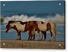 Beach Bum Ponies Acrylic Print by William Bartholomew