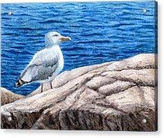 Beach Bum Acrylic Print by Shana Rowe Jackson