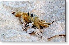 Beach Crab Acrylic Print
