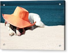 Acrylic Print featuring the photograph Beach Day For Bubba by Shelley Neff
