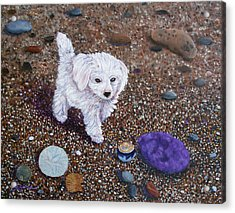 Beach Discoveries Acrylic Print by Laura Iverson